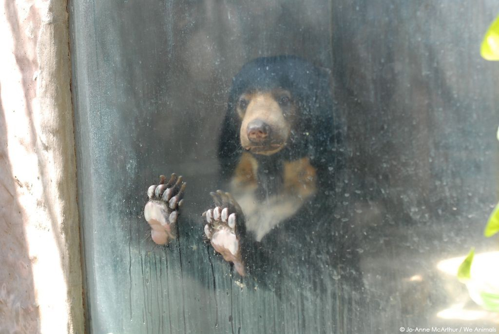 Sad Bear at Zoo