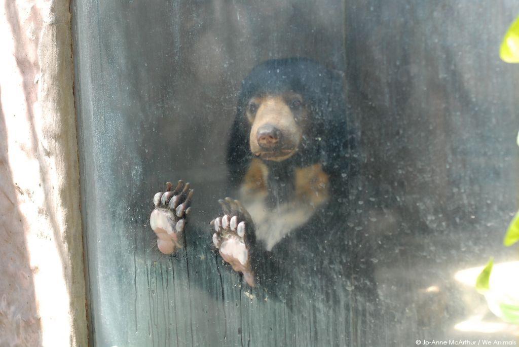 Trauriger Bär im Zoo