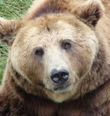 12 Surprising Animals People Actually Wear