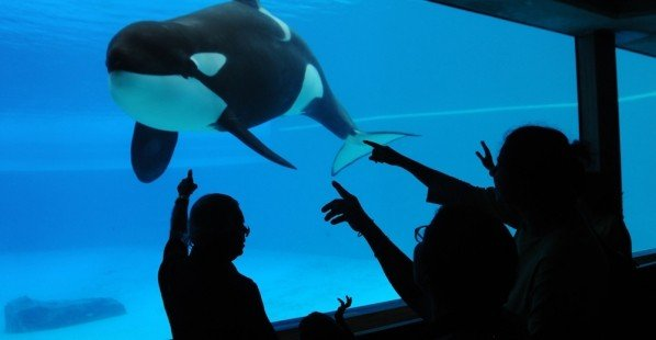 GET RUDOLPH OUT OF SEAWORLD