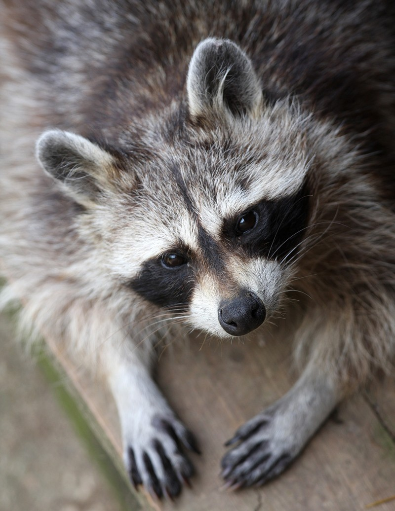 12 surprising animals people actually wear photos peta kids
