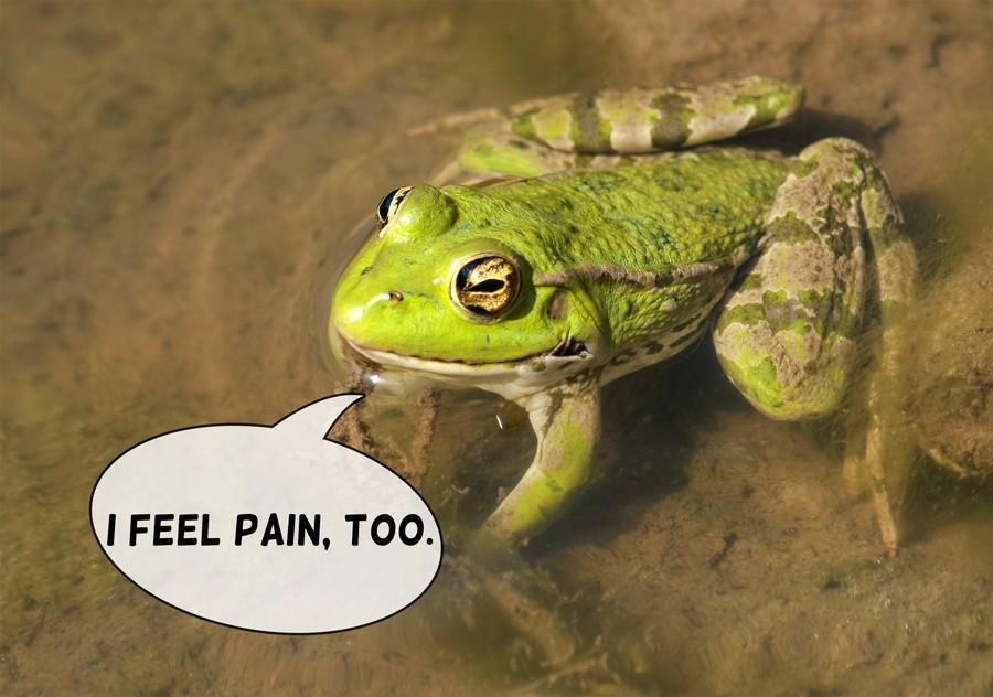 I-Feel-Pain-Too-Frog
