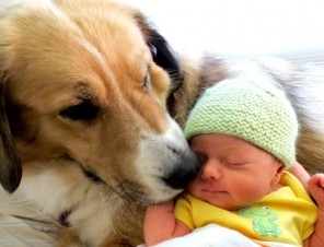 Introducing a New Baby to Your Canine Companion