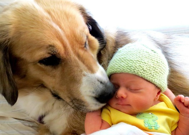 Introducing-Baby-to-Companion-Animals-Pic