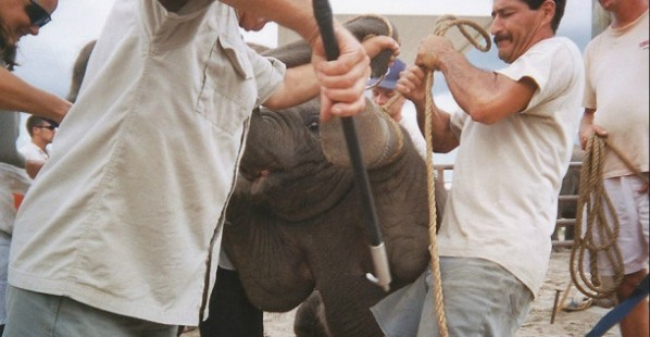 Ringling: Send Animals to True Sanctuaries!