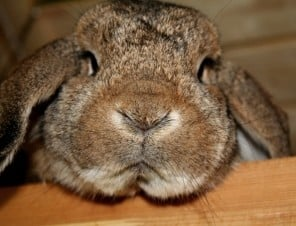 The 17 Most Important Bunny Facts of All Time
