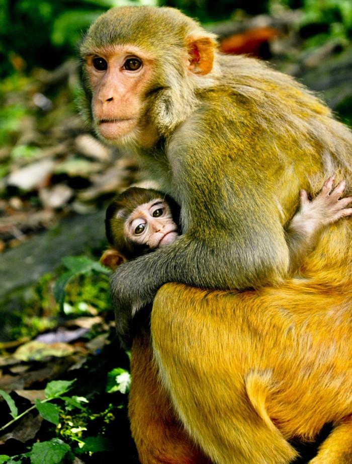 Mom-and-Baby-Monkey-Hugging