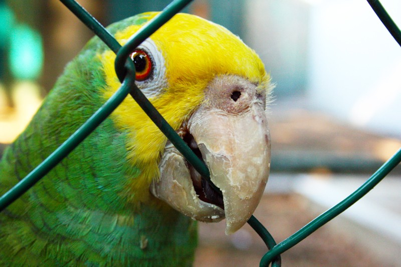 Parrot-in-Cage