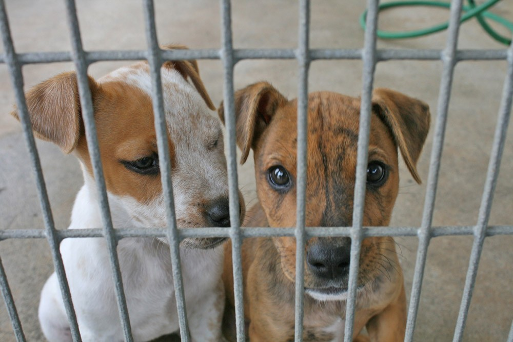 Puppies-In-Cage