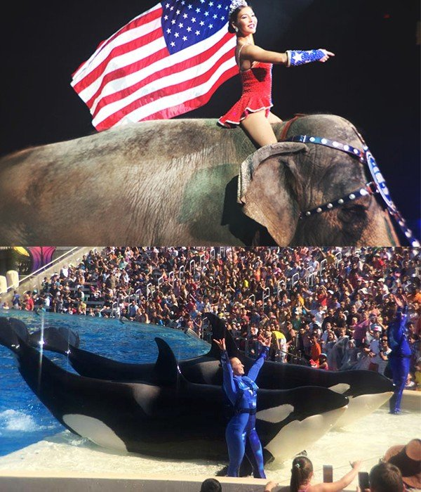 Ringling-Elephant-and-SeaWorld-Orca-Trick