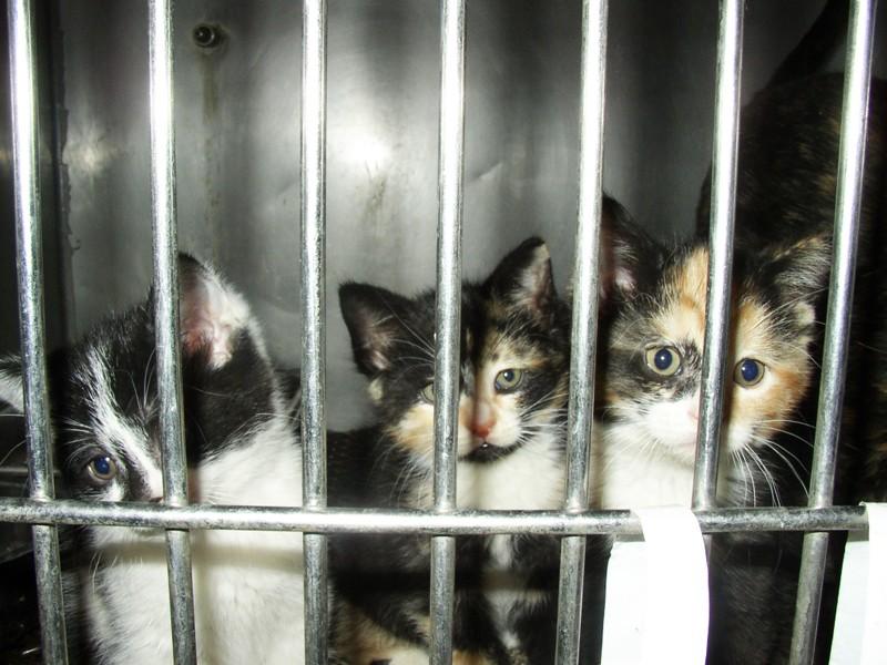 Sad-Kittens-Cats
