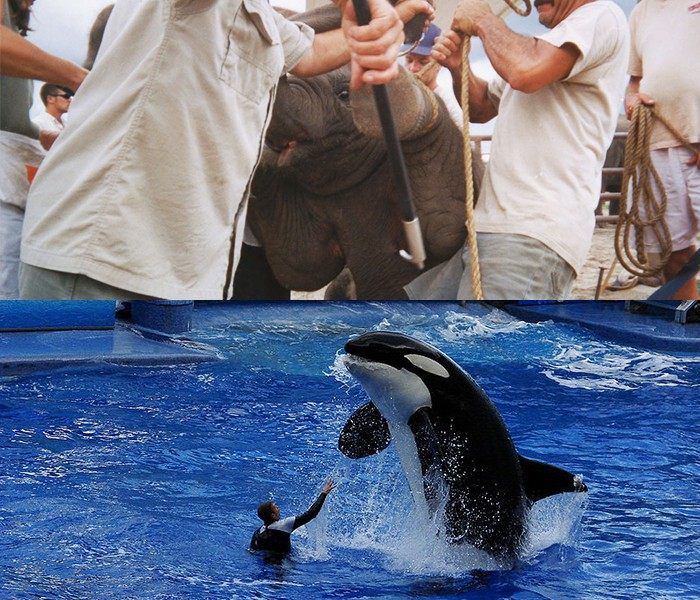 SeaWorld-and-Ringling-Illegal-Activities