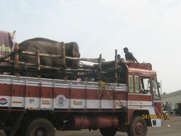 Sunder-On-Truck-2