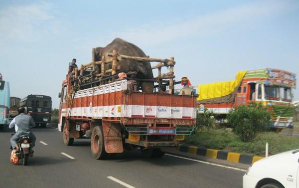 Sunder-On-Truck-3