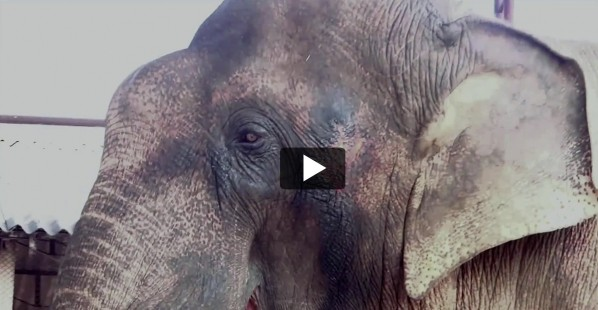 Sunder the Elephant's Rescue Story