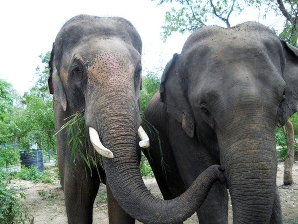 Lakshmi and Sunder love hanging out.