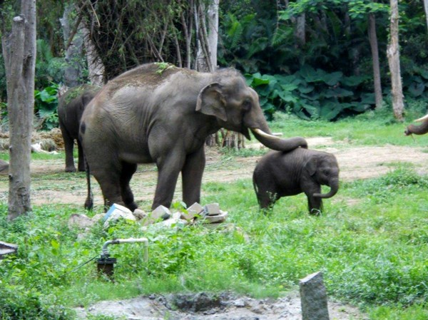 Sunder is getting to know baby Shiva.