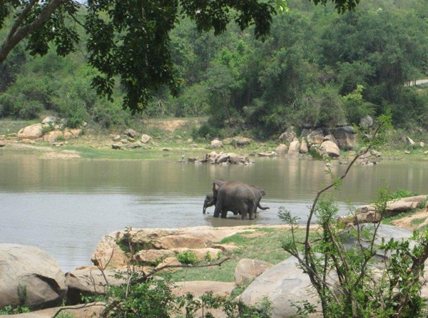 Sunder's soon-to-be BFF's enjoy the lake! Sunder's new home is a spacious, forested area where he can explore.