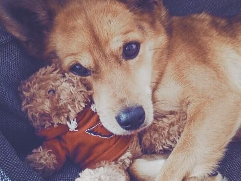 Amadeus-Dog-Toy