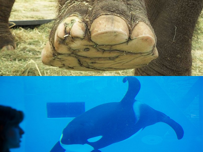 Elephant-Toenail-and-Collapsed-Orca-Fin