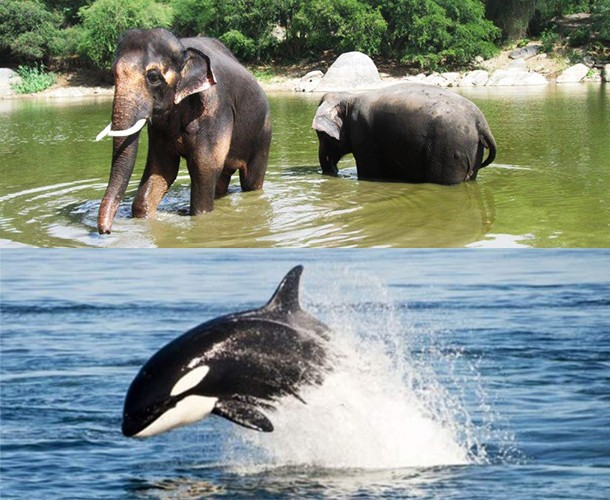 Happy-Elephants-and-Orca