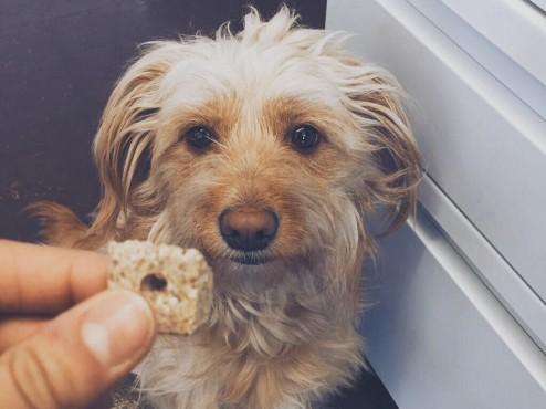 Jovie-Dog-Treat