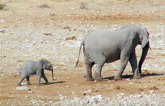 Mom-and-Baby-Elephant