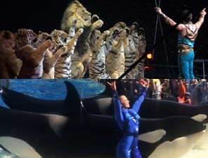 The Only Difference Between Circuses That Use Animals and SeaWorld