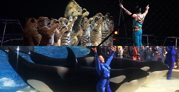 Ringling-SeaWorld-Difference-Featured-Image