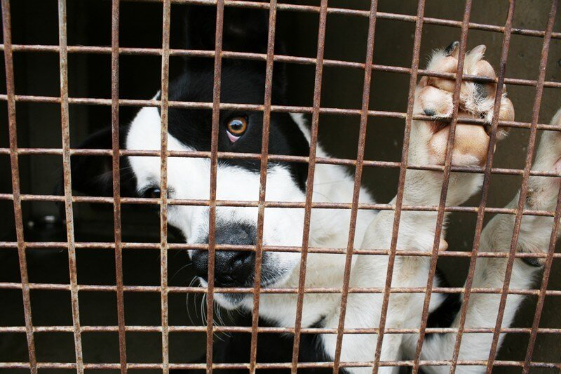 10 Ways Kids Like You Can Help Animals in Shelters | Save