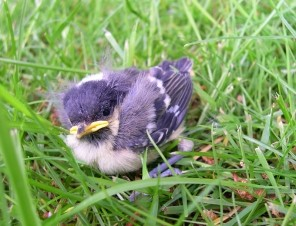 A Guide to Helping Baby Birds