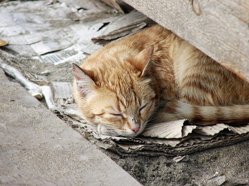 Homeless-Cat