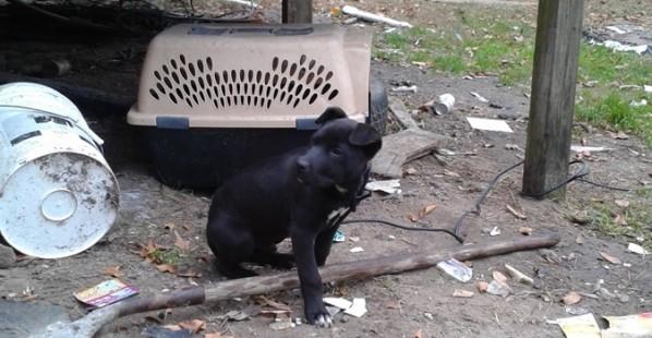 Justice-Puppy-Dog