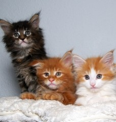 How Important is Spaying and Neutering, Really?
