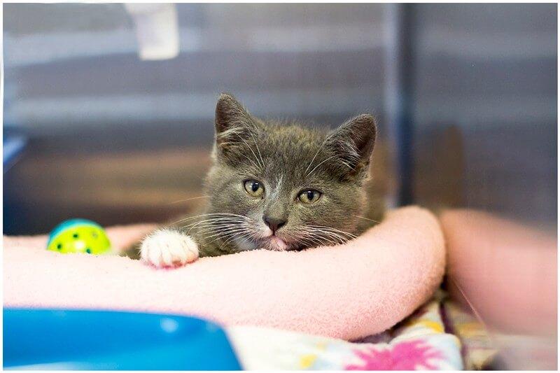 Stormy-Rescue-Kitten