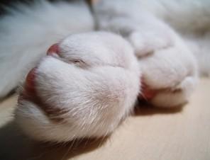 8 Ways Declawing Cats Hurts Them