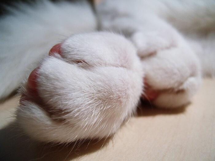 Cat-Paw