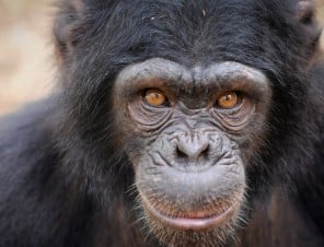 Great Apes Don't Belong in Hollywood!