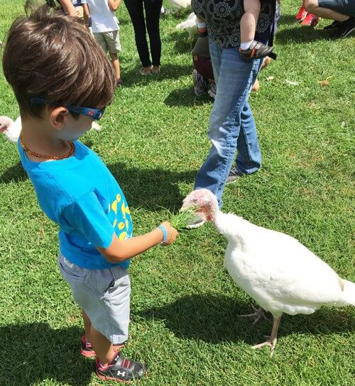 Matthew-at-Animal-Sanctuary-with-Turkey