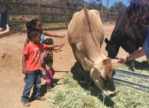 Palacio-Butler-Kids-at-Farm-Sanctuary