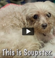 Soupster the Pup Is Lucky to Be Alive