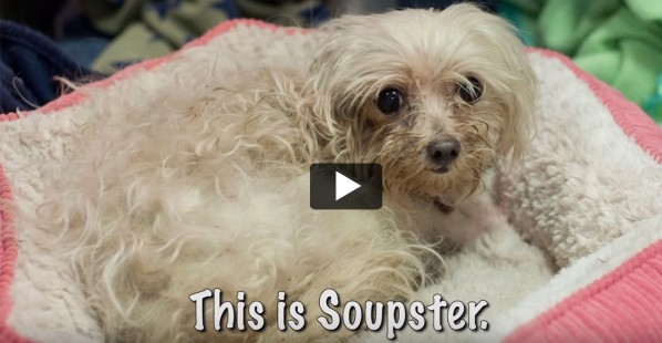 Soupster-Dog-Adopt-Rescue