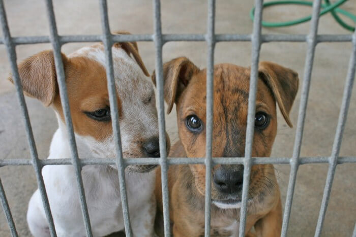 Caged-Puppies-Dogs-Small
