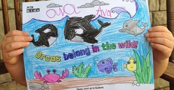 Free Orca Activity Sheets
