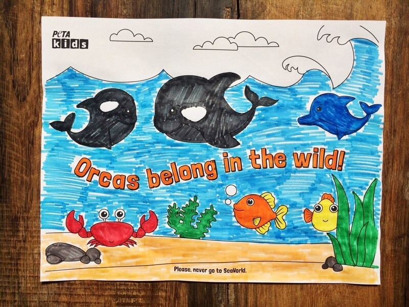 Orcas-Belong-in-the-Wild-Sheets