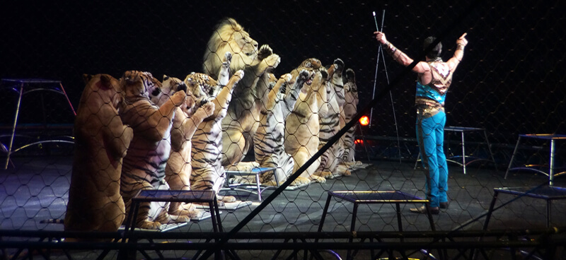 Big-Cats-Lion-Tiger-Circus
