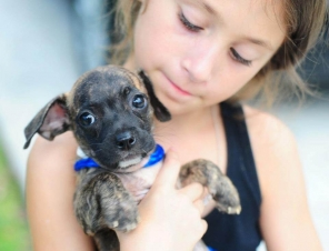 10 Ways Kids Can Help Animals in Shelters