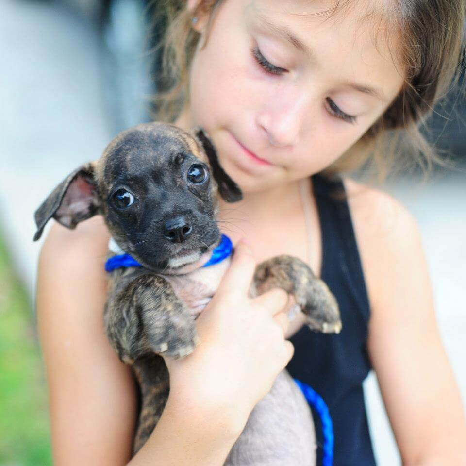 40799aab7783 10 Ways Kids Like You Can Help Animals in Shelters | Save Animals | PETA  Kids