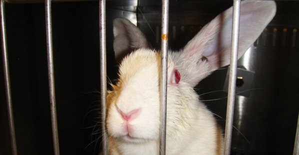 Rabbit-in-Lab