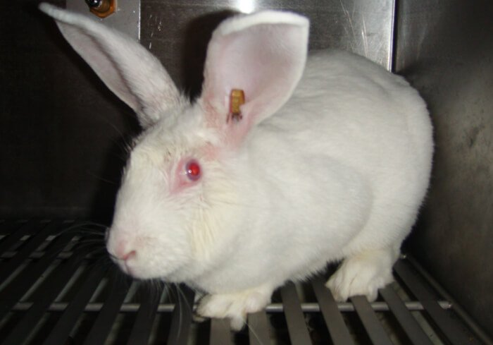 Scared-Rabbit-in-Cage